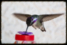 Nectar DOTS Hummingbird Feeder Nature Products USA, Hand Held Hummingbird Feeder