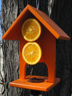 Nature Products USA - Oriole - Fruit & Jelly Window Bird Feeder