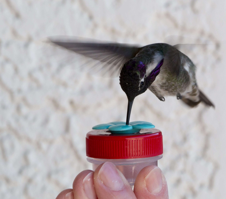 Hummingbird @ Nectar DOTS