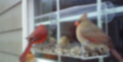 Nature Products USA - Acrylic Window Bird Feeder