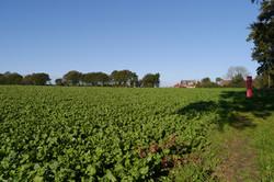 Top Farm 1 (2014)