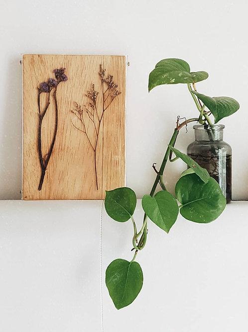 Placas Botânicas - Acrílico Móvel