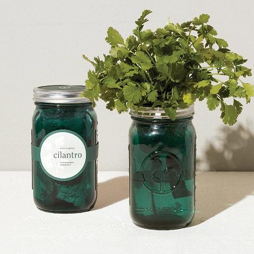 Garden Jar - Cilantro
