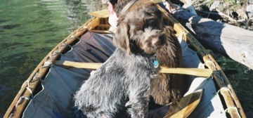 16. canoe pup zonker 3 mo (b1)