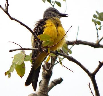 Aves de Leticia Amazonas.