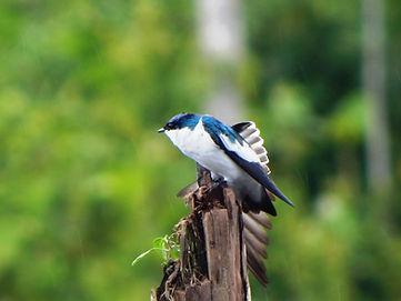 tour para observadores de aves en Leticia.