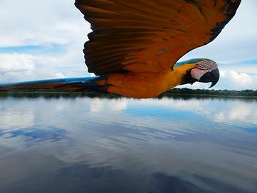 Observación de aves en el amazonas.