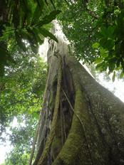 Amazonas (20).jpg