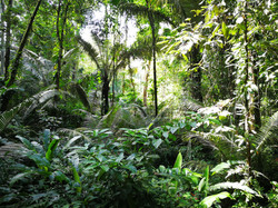 Tropical wet forest