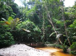 Amazon jungle