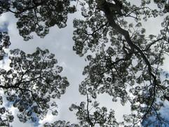 Amazonas (38).JPG