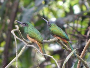 Plan de Observación de aves en Leticia