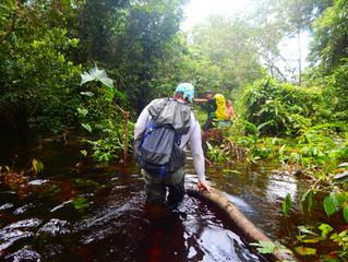 Amazonas Experience