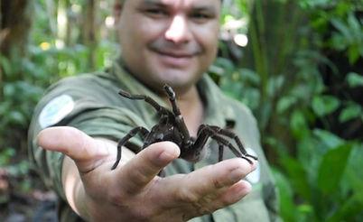 Tarantula Elvis (2) editado.jpg