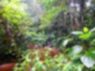 Actividades en selva del Amazonas
