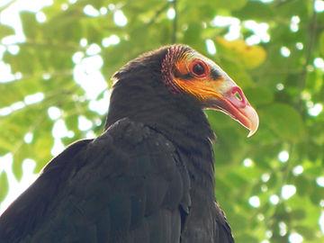 Plan de Observación de Aves en Leticia.