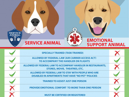 Service Animal vs. Emotional Support