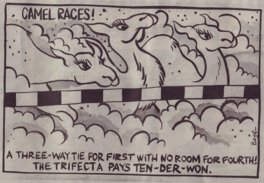 Camel Races Cartoon