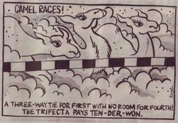 Camel Races Cartoon