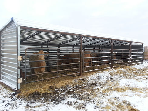 Promold 24' Cattle Shelter with Cattle in 4 pens