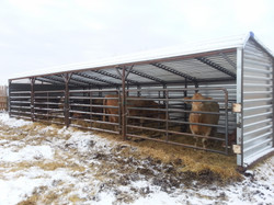 cattle shed w cow_edited