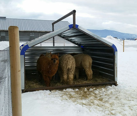 Promold 8' x 8' Livestock Shelter with Alpacas