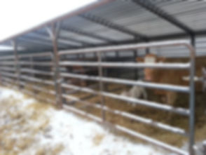 Promold 24' Cattle Shelter with Cow, Calf pair