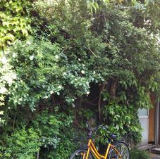 【014】木香薔薇の家