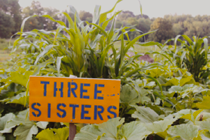 Land as Teacher: Three Sisters Plot