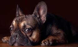 Long Island Dog Trainer