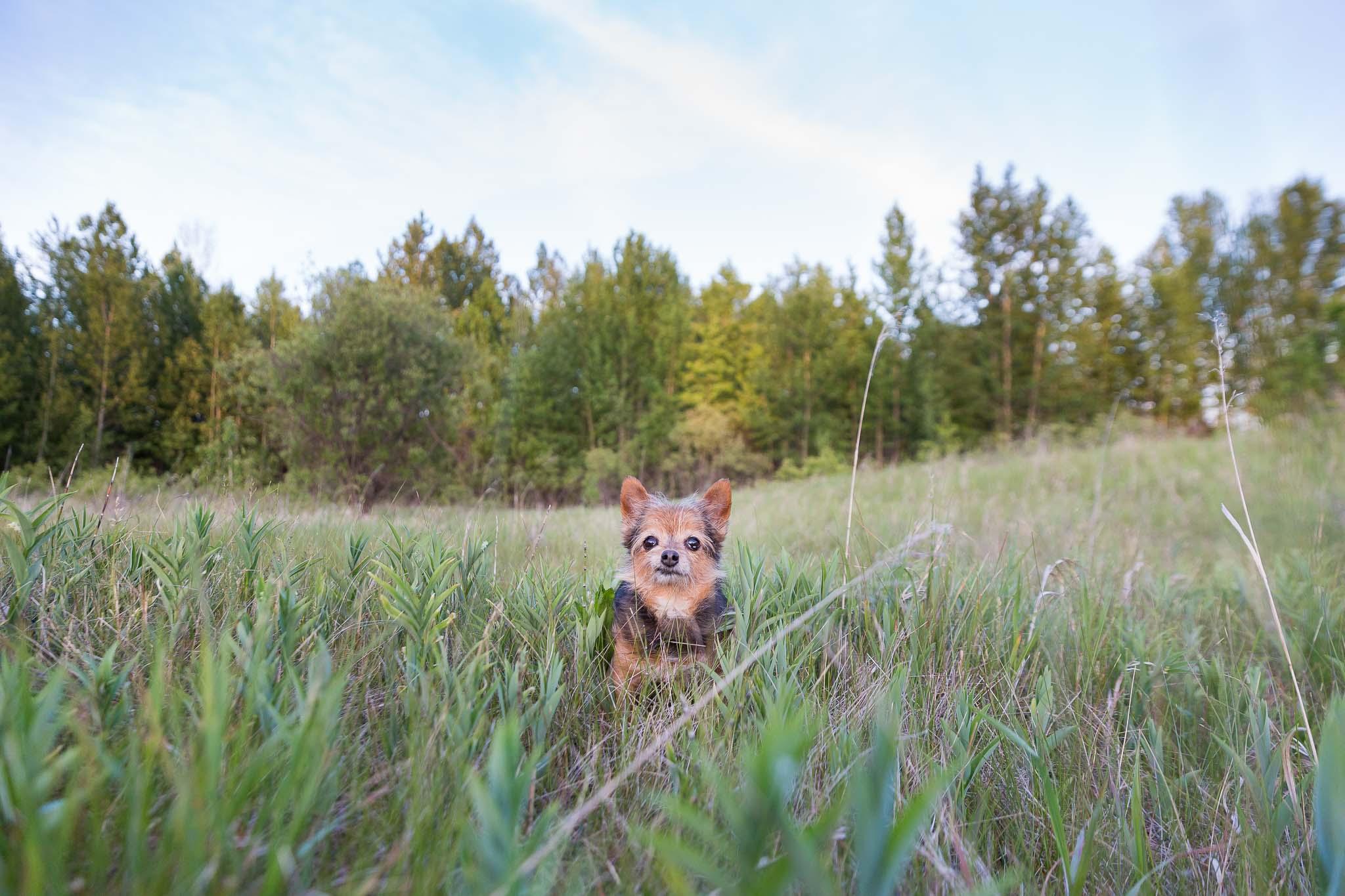 Edmonton Pet Photos
