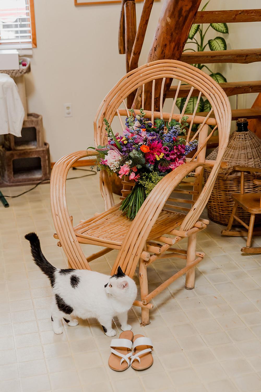 Wedding Cat, Wedding Cats, Cat at a wedding