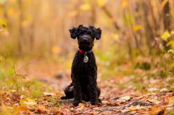 Dog Fall Photos