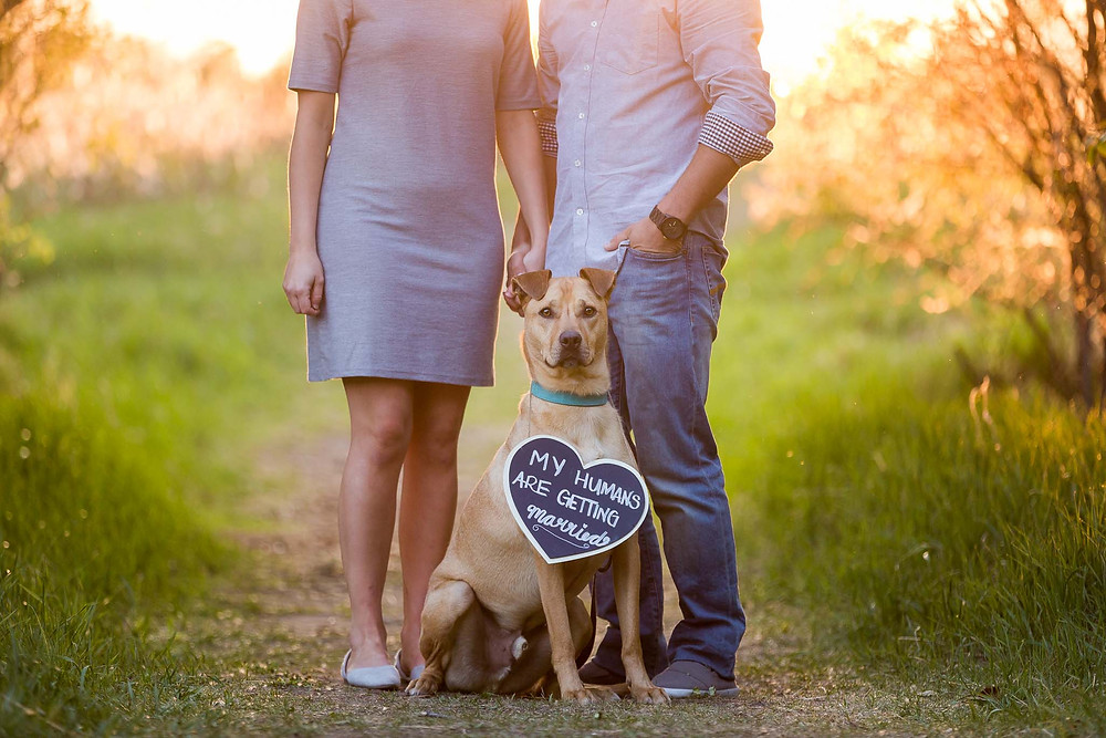 Dog with save the date sign