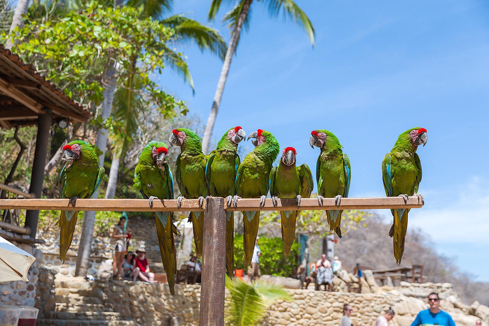 Cool Parrots On The Island