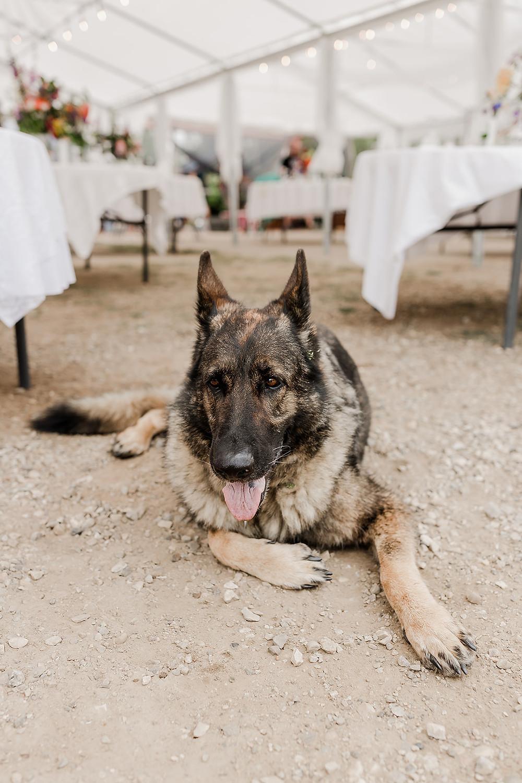 Wedding dog, wedding puppy