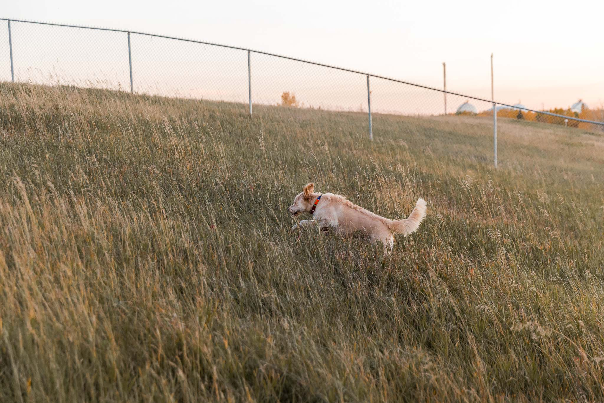 Edmonton Animal Blog