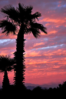 Backyard Sunset. Palm Trees. hotograph by Randy Zucker.