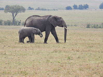 Out For A Stroll With Mama, Mama Elephant, Baby Elephant, Serengeti,  Photograph by Randy Zucker