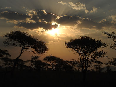 African Sunset, Acacia Trees, Photograph by Randy Zucker