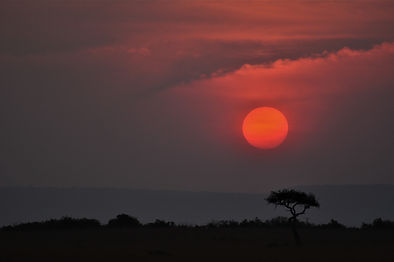 Sunset On The Serengeti, Sunset, Acacia Tree,  Photograph by Randy Zucker