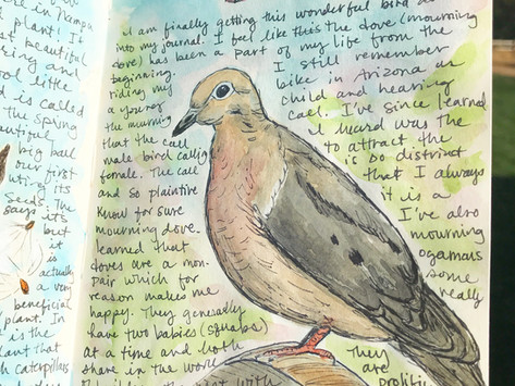 HOW TO START A NATURE JOURNAL – A BEGINNERS GUIDE