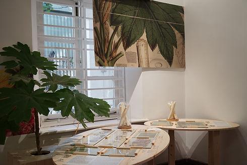 Rice-Paper Plant / Tetrapanax papyrifer