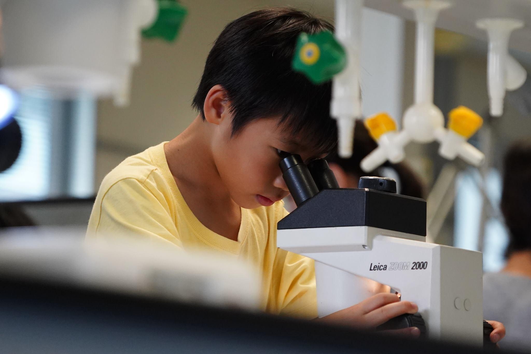顯微鏡下的昆蟲 Insect Lab Observation