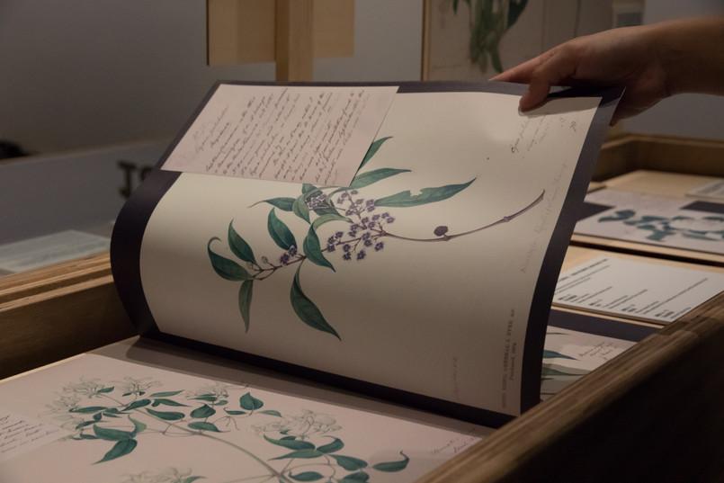 Copy of 約翰·艾爾植物水彩畫 2.jpg