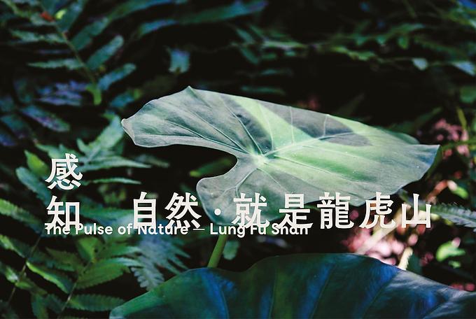 Facebook:website - leaf.png