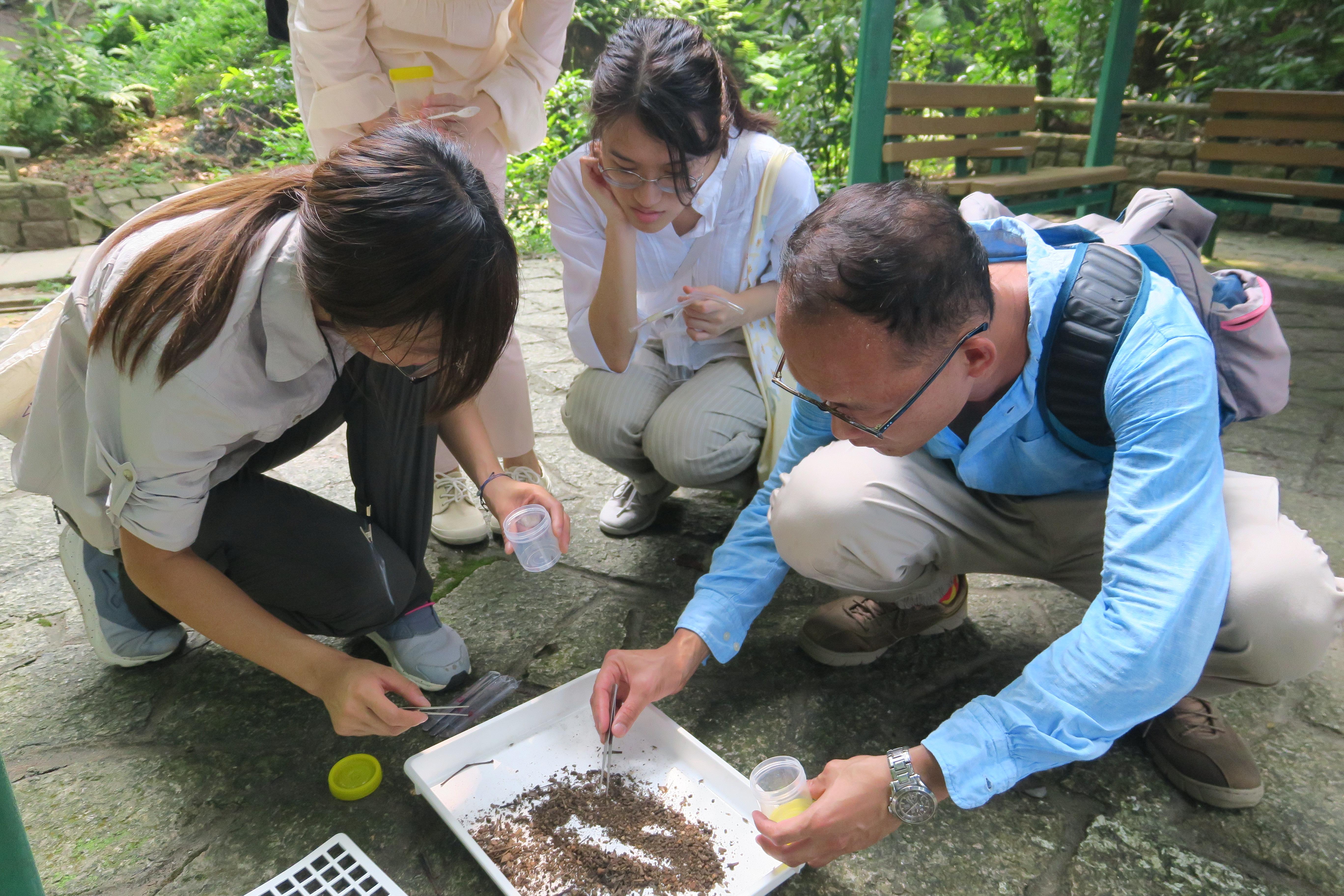 昆蟲落葉袋收集法 Insect collection