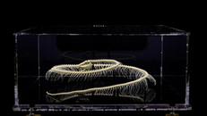 Snake Skeleton prepared by Bogadek