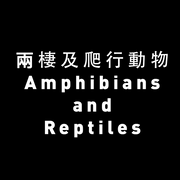 Amphibians and Reptiles experts >>