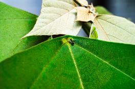 白楸和螞蟻